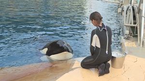 DIVE BEHIND THE SCENES AT MARINELAND
