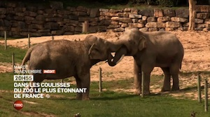 The PAL zoo: behind the scenes in the most amazing zoo in France
