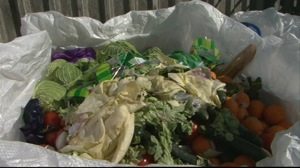 The scandal of wasted food