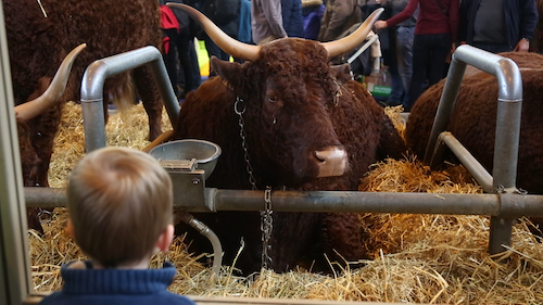 BEHIND THE SCENES AT THE AGRICULTURAL FAIR