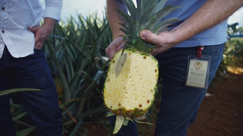 PINEAPPLE: THE KING OF FRUITS ?